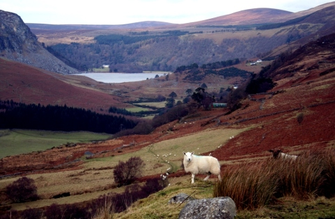 Loch Dan, Co. Wicklow